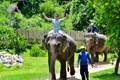 Elephant Riding - Luang Prabang Day Tour
