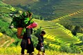 Terraced rice paddy fields in Sapa - 12 days package tour  discover treasure on Vietnam