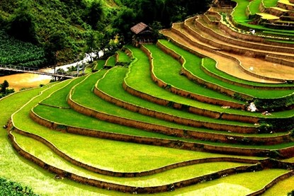 Terraced rice  fields
