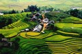 The terraced  rice field